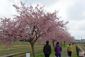 すみよし桜の里