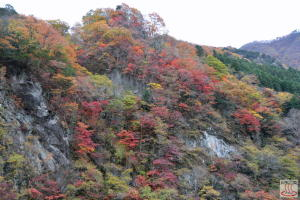 三峰渓谷大血川ドライブイン付近の紅葉